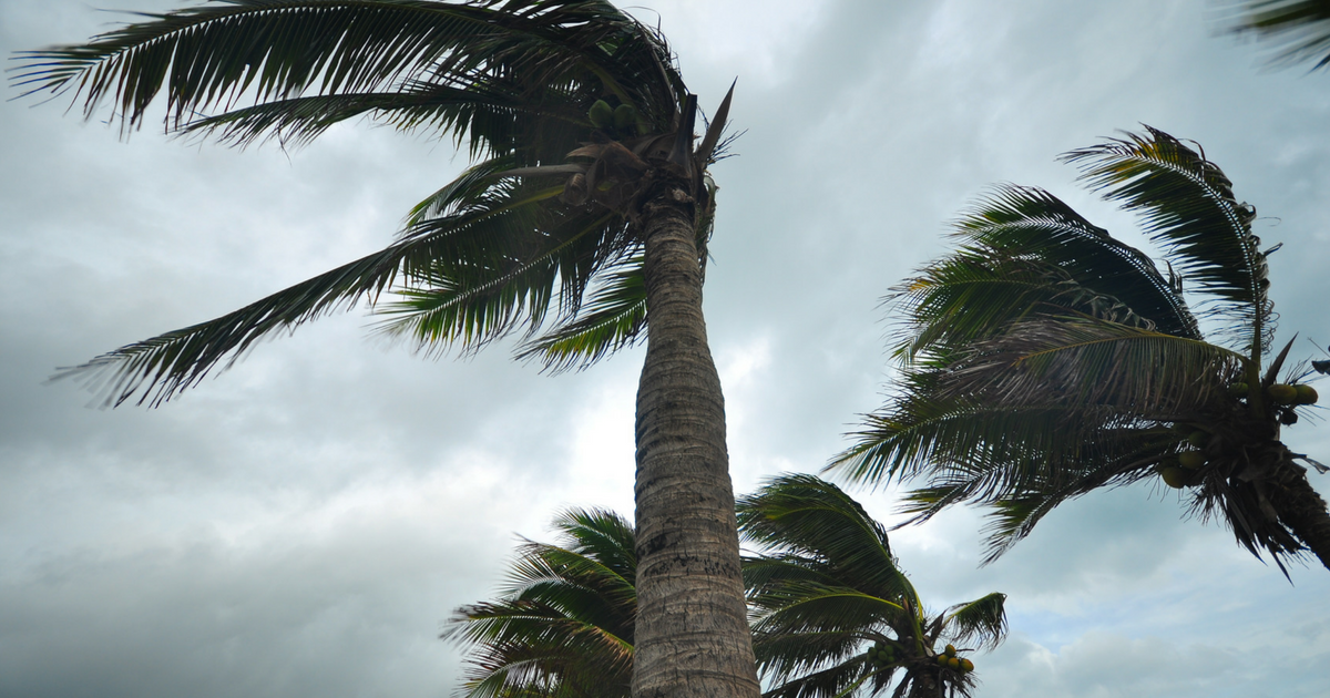 How To Protect Your Homefrom Deadly Wind Damage