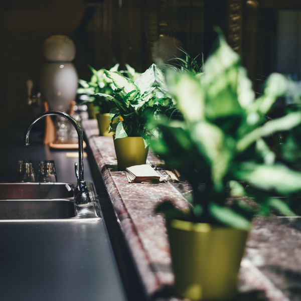 How to Keep Your House Cool During Miami Summer - House Plants